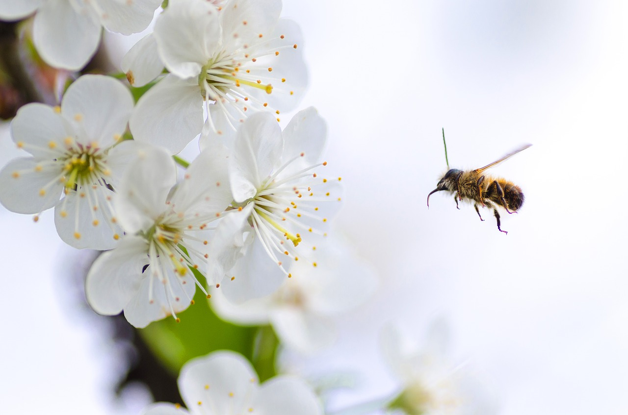 5 Ways to Plant a Bee Friendly Garden
