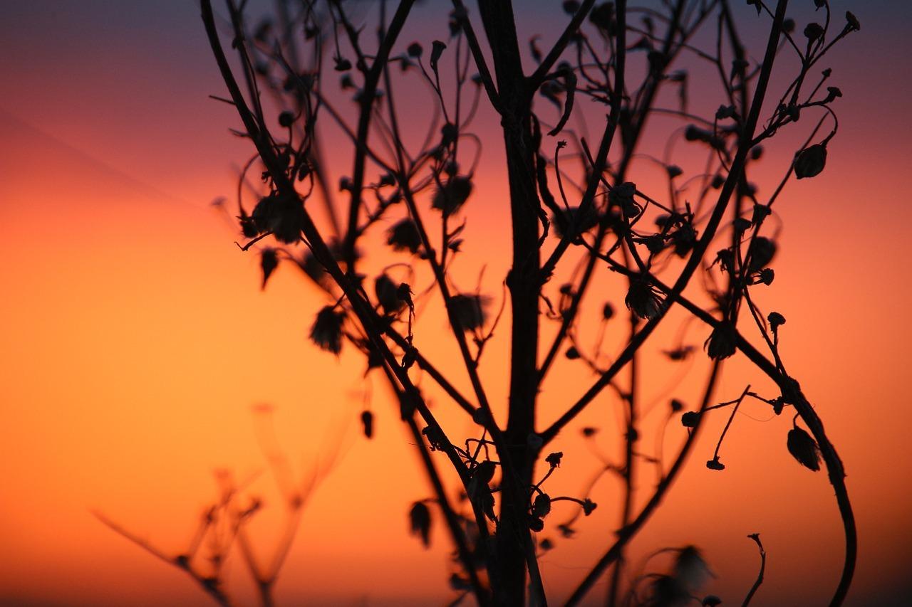 Mystical Magical Mugwort – herb for dreams and visions