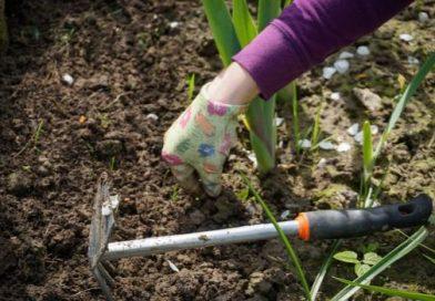 How to Prepare the Spring Garden