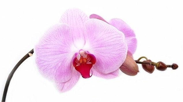 https://www.orchidsecretsrevealed.com/?hop=herblady47